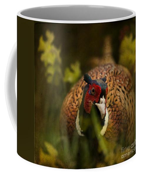 Pheasant Coffee Mug featuring the photograph Mr Spring by Angel Ciesniarska