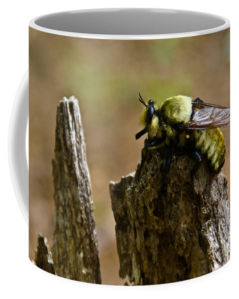 Fly Coffee Mug featuring the photograph Mrs. Fly by Douglas Barnett