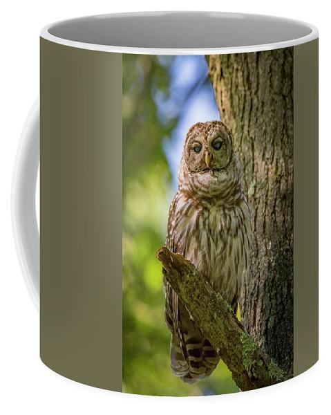 Owl Coffee Mug featuring the photograph Mrs. Owl by Joe Gliozzo