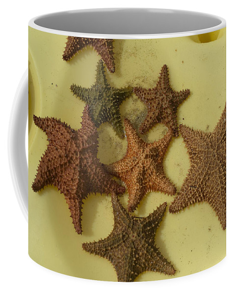 Basseterre Coffee Mug featuring the photograph Multi-colored Star Fish On The Sand by Todd Gipstein