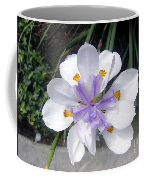 Rare Form Coffee Mug featuring the photograph Multi-petal White Iris Flower. Very Unusual, Rare Form by Sofia Metal Queen
