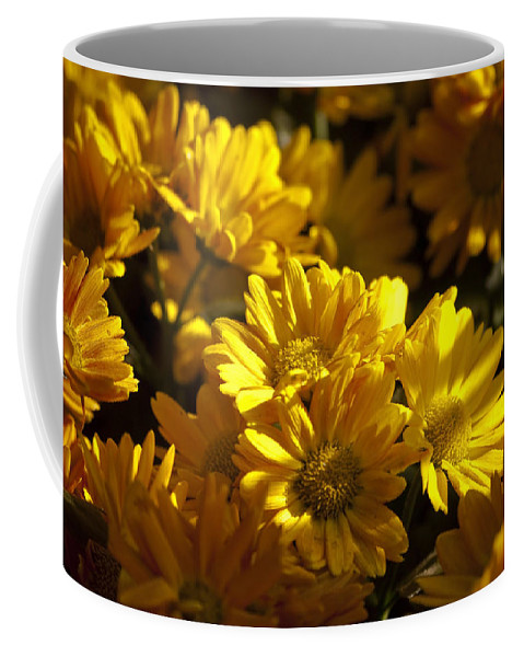 Mums Coffee Mug featuring the photograph Mums And Shadows by Sven Brogren