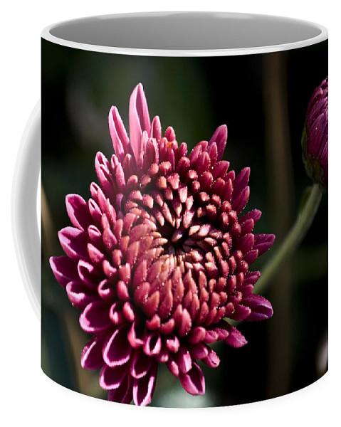 Chrysanthemum Coffee Mug featuring the photograph Mums by Svetlana Sewell