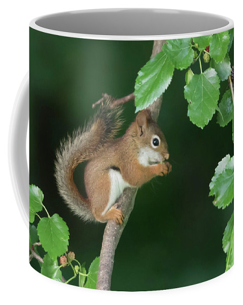 Red Squirrel Coffee Mug featuring the photograph Munching Mulberries by Rhoda Gerig
