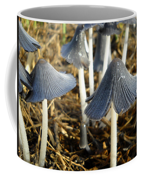 Mushrooms Coffee Mug featuring the photograph Mushrooms After A June Rain by Kent Lorentzen