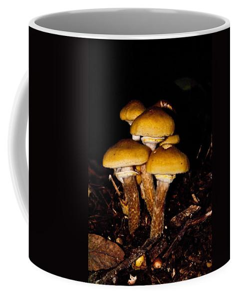 Mushrooms Coffee Mug featuring the photograph Mushrooms By Night by Douglas Barnett