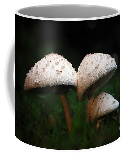 Mushrooms Coffee Mug featuring the photograph Mushrooms In The Morning by Robert Meanor