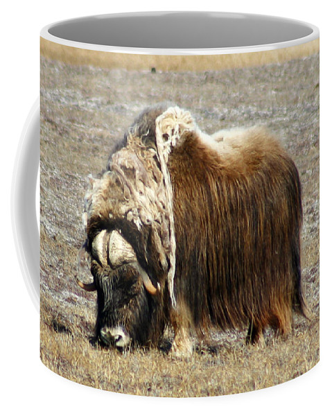 Musk Ox Coffee Mug featuring the photograph Musk Ox by Anthony Jones