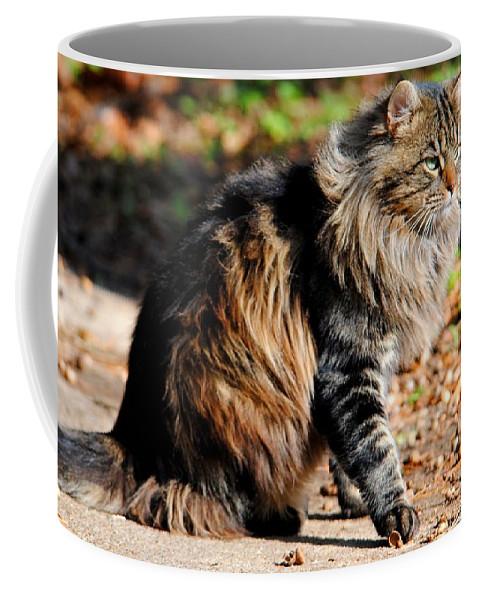 Cat Coffee Mug featuring the photograph My Acorn by Jai Johnson