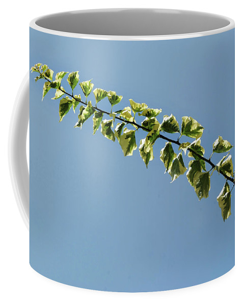 Vine Coffee Mug featuring the photograph My Bougainvillea Aurea 1 by Gary Bartoloni