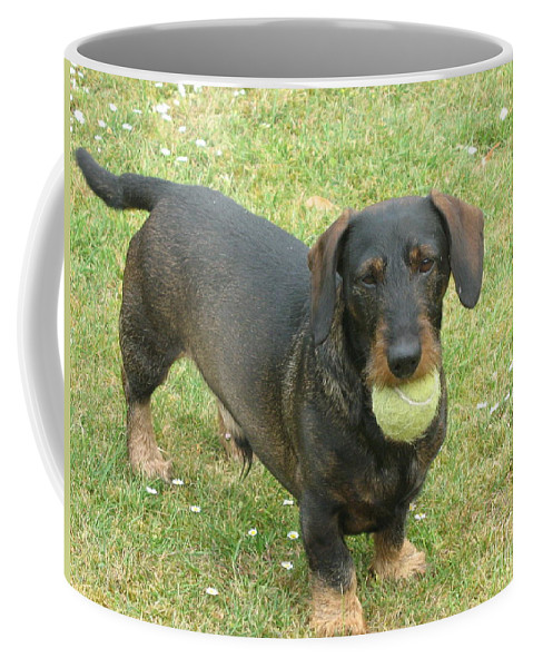 Dog Coffee Mug featuring the photograph My Favored Toy by Christiane Schulze Art And Photography