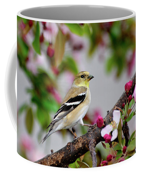 American Goldfinch Coffee Mug featuring the photograph My House Is Pretty by Betty LaRue