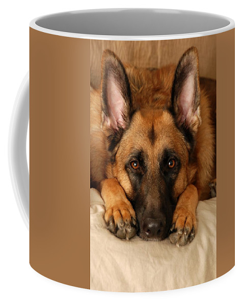 German Shepherd Dogs Coffee Mug featuring the photograph My Loyal Friend by Angie Tirado