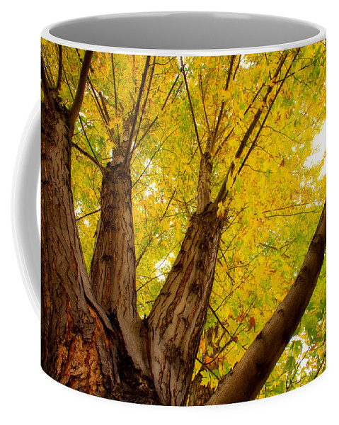Tree Coffee Mug featuring the photograph My Maple Tree by James BO Insogna