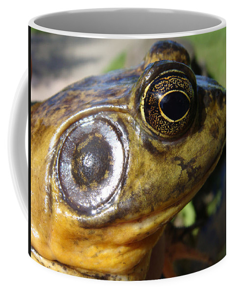 Frog Coffee Mug featuring the photograph My What Big Eyes You Have by Donna Blackhall