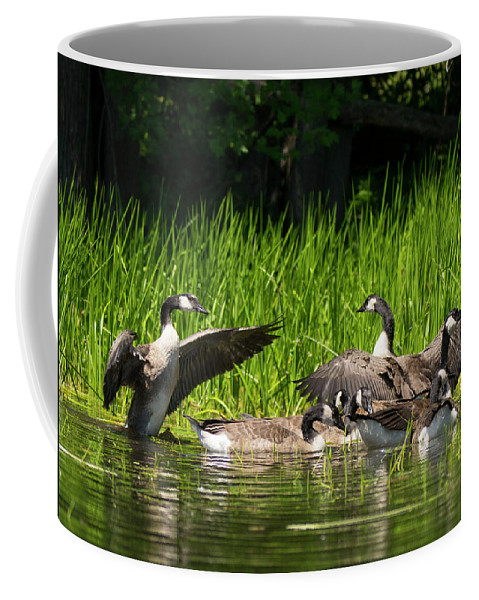 Canadian Geese Coffee Mug featuring the photograph My Wings Are Bigger by Jan Mulherin
