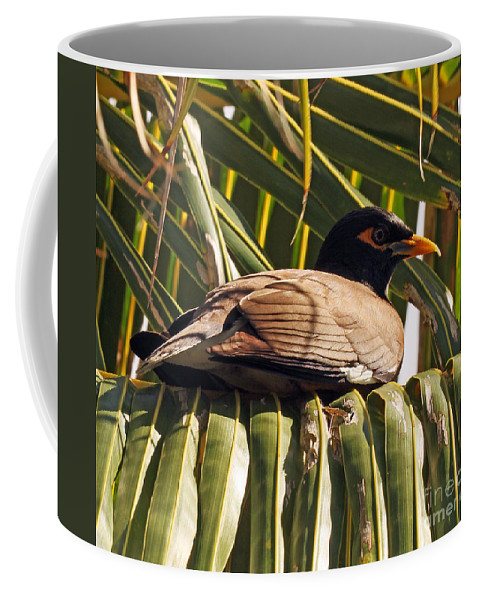 Common Myna Coffee Mug featuring the photograph Myna In The Palms by Jennifer Robin