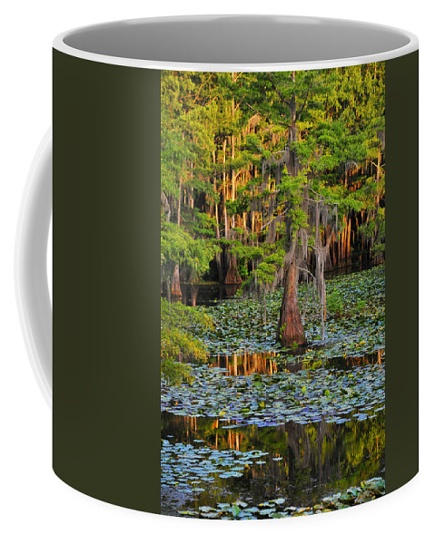 Bog Coffee Mug featuring the photograph Naked by Skip Hunt