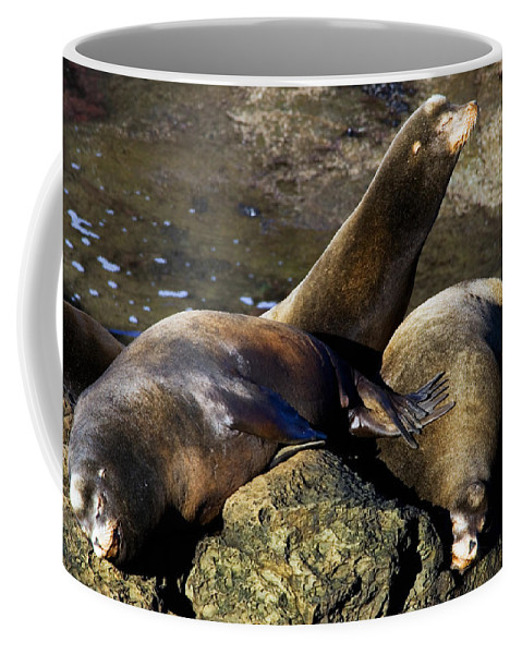 Sea Lion Coffee Mug featuring the photograph Nap Time by Randall Ingalls