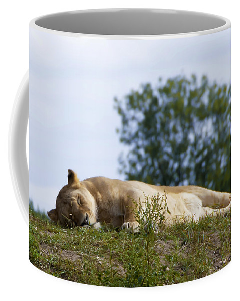 Adult Coffee Mug featuring the photograph Nappy Time by Svetlana Sewell