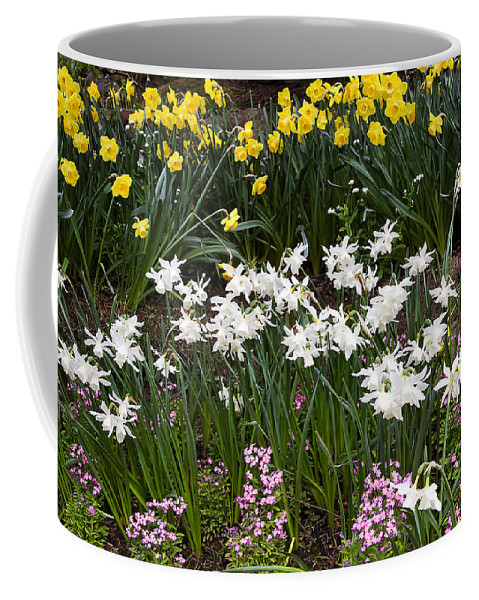 Flower Coffee Mug featuring the photograph Narcissus And Daffodils In A Spring Flowerbed by Louise Heusinkveld