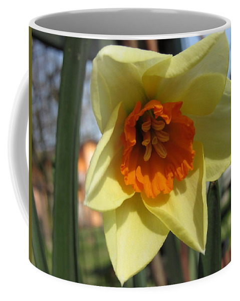 Flowers Coffee Mug featuring the photograph Narcissus by Vesna Martinjak