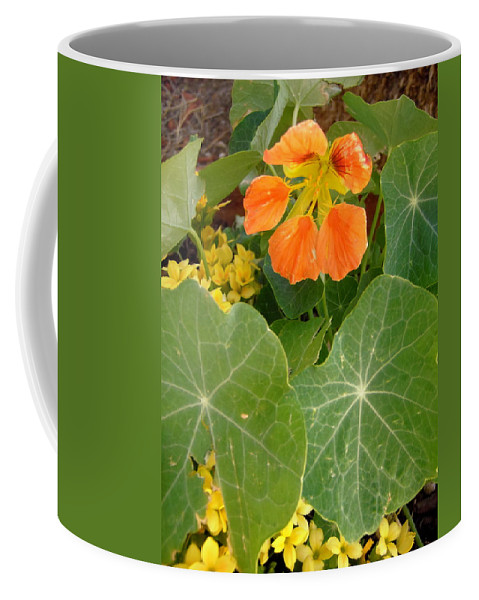 Flowers Coffee Mug featuring the photograph Nasturtium by Stephanie Moore