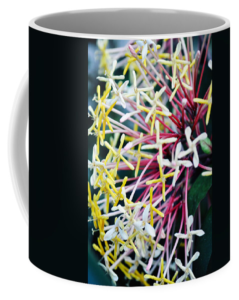 Peggy Notebaert Nature Museum Coffee Mug featuring the photograph Nature Museum Botanical by Kyle Hanson