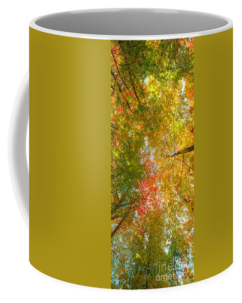 Fall Foliage Coffee Mug featuring the photograph Natures Canopy Of Color by Michael Ver Sprill