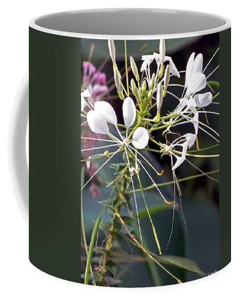 Lauren Radke Coffee Mug featuring the photograph Nature's Design by Lauren Radke