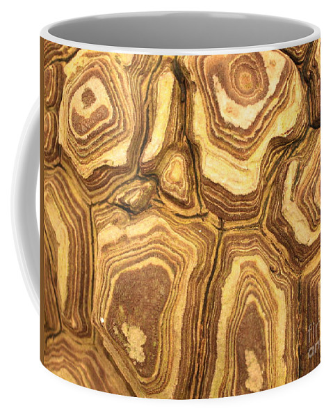 Nature Coffee Mug featuring the photograph Nature's Interesting Patterns by Carol Groenen