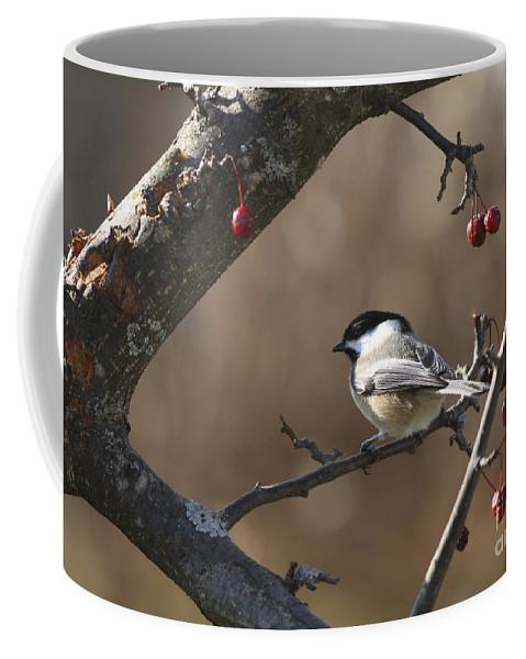 Bird Coffee Mug featuring the photograph Natures Small Wonders by Deborah Benoit
