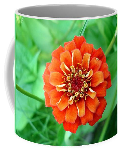 Dahlia Flowers Coffee Mug featuring the photograph Nepal Orange 2 by Nelson F Martinez