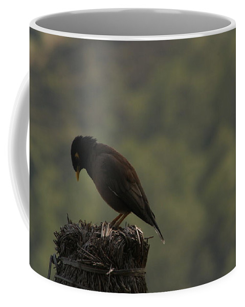 Raven Coffee Mug featuring the photograph Nepalese Raven Bird by Dagmar Batyahav