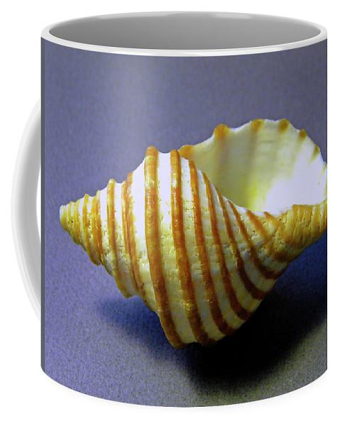 Frank Wilson Coffee Mug featuring the photograph Neptune Whelk Seashell by Frank Wilson