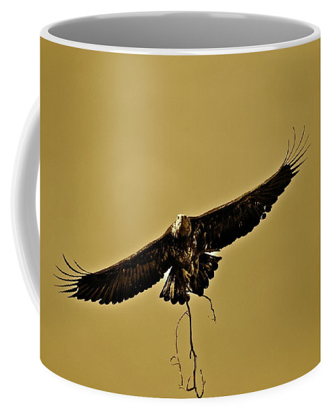 Eagle Coffee Mug featuring the photograph Nesting by Diana Hatcher