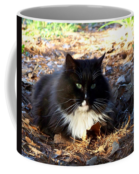 Cat Coffee Mug featuring the photograph Nesting by Jai Johnson