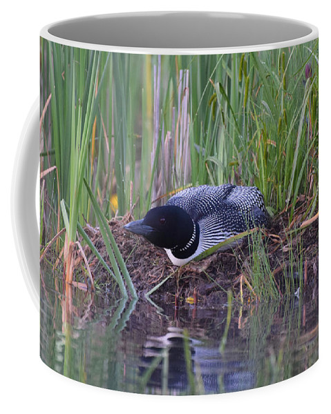 Loon Coffee Mug featuring the photograph Nesting Loon by Jan Mulherin
