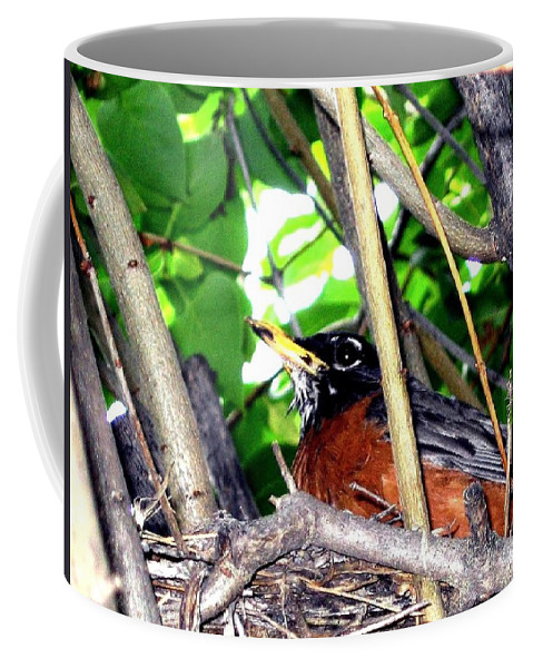 Robin Coffee Mug featuring the photograph Nesting Robin by Will Borden