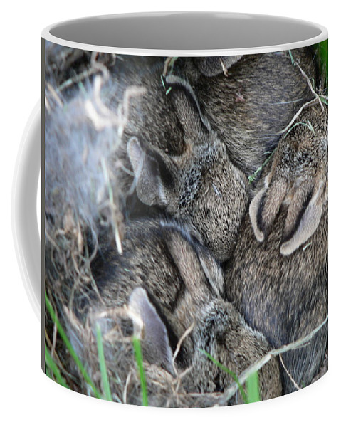 Bunny Coffee Mug featuring the photograph Nestled In Their Den by Laurel Best
