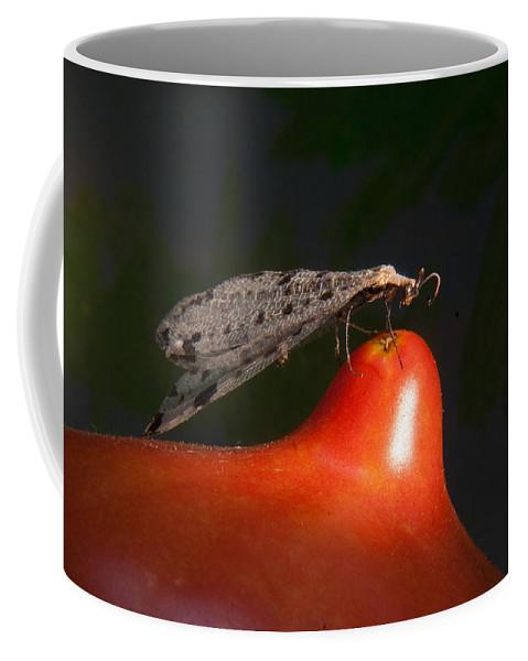 Neuropter Coffee Mug featuring the photograph Neuroptera Posing by Douglas Barnett