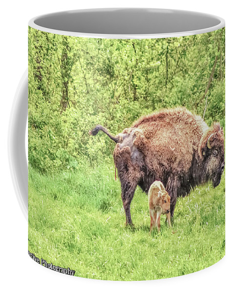 Buffalo Coffee Mug featuring the photograph New Born Bison by Chad Fuller