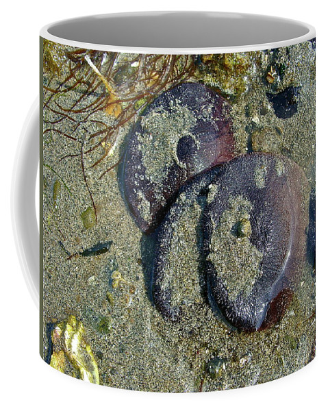 Beach Coffee Mug featuring the photograph New Dollars by Diana Hatcher