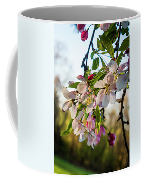 Cherry Blossoms Coffee Mug featuring the photograph New Life by Denise Harty