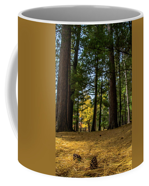 Trees Coffee Mug featuring the photograph New Life by Lowlight Images