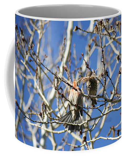 Bird Coffee Mug featuring the photograph Newlyweds by Marilyn Hunt