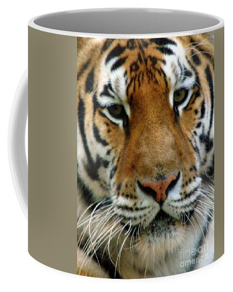 Tiger Coffee Mug featuring the photograph Nice Cat by Kathleen Struckle