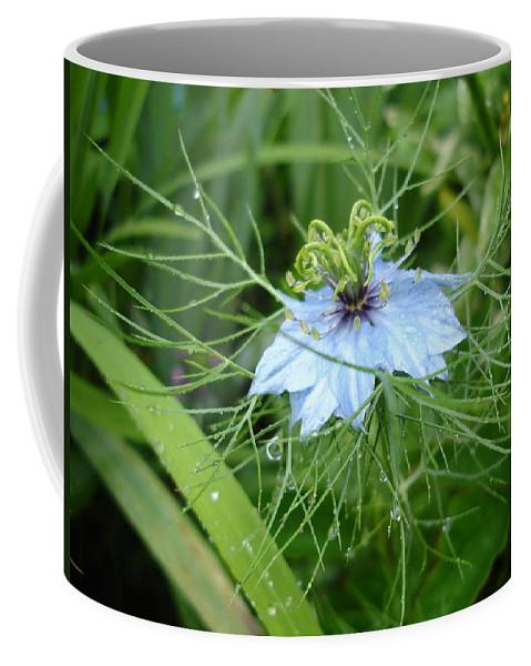 Flower Coffee Mug featuring the photograph Nigella In Spring Rain by Susan Baker