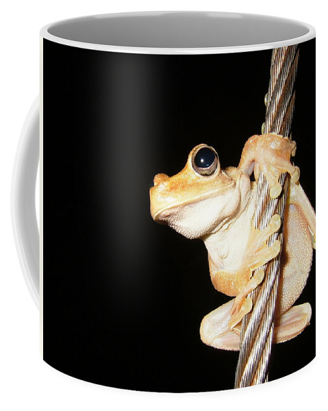 Frog Coffee Mug featuring the photograph Night Frog by Sabine Greger