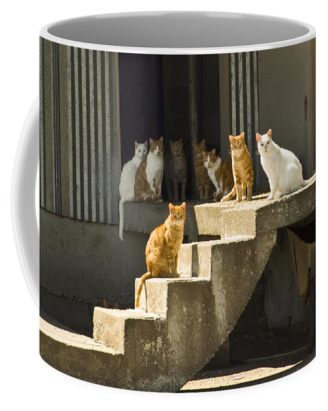 Cats Coffee Mug featuring the photograph Nine Lives by Louise Magno